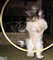 Zoe jumping through a Hula-hoop